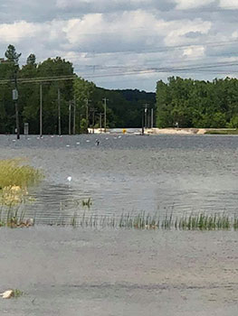 West Alton Levee June 2019